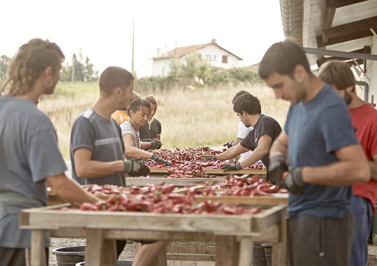 atelier-du-piment-espelette-equeutage