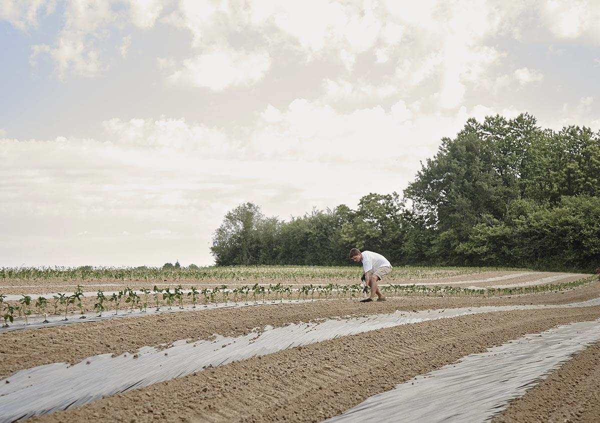 atelier-du-piment-espelette-plantation-graine